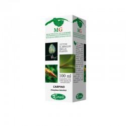 Gemmoderivato Betulla Carpino integratore naturale protezione completa delle vie respiratorie